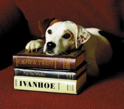 Wishbone the dog relaxing on a stack of classic Western novels.